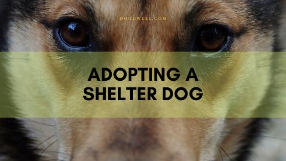 Adopting A Shelter Dog