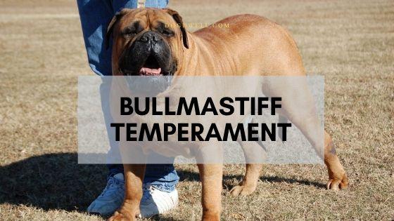 bullmastiff temperament
