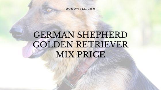 german shepherd golden retriever mix price