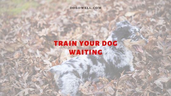 Train Dog Waiting