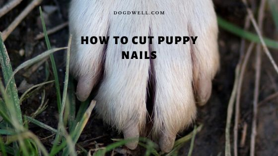 how to cut puppy nails