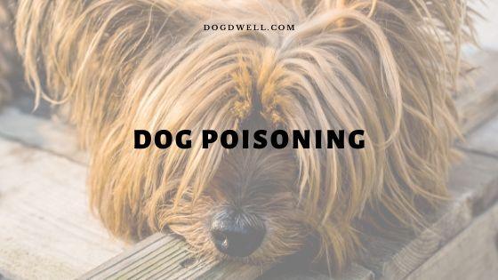 dog poisoning