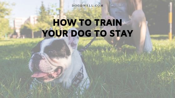 how to train your dog to stay