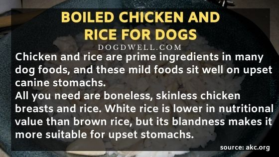 boiled chicken and rice for dogs boiled chicken and rice dog boiled chicken and rice for dogs with upset stomach boiled chicken and white rice for dogs boiled chicken and rice for puppy feeding dog boiled chicken and rice boiled chicken and rice recipe for dogs boiled chicken rice dog boiled chicken breast and rice for dogs