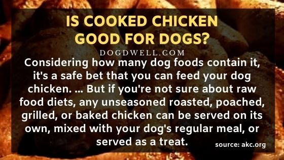 Is Cooked Chicken Good for Dogs?